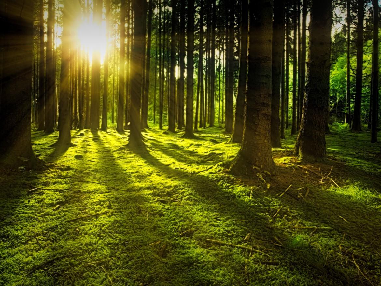 Eine friedvolle Waldszene, die Sonne scheint zwischen Bäumen hindurch.