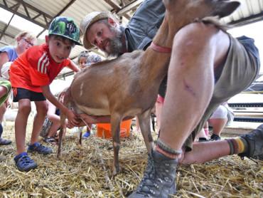 Bauer Bernd Verhoeven zeigt Besuchern wie man eine Ziege melkt.