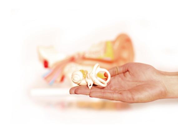 Das Modell eines Ohres liegt zur Veranschaulichung auf einer Hand.
