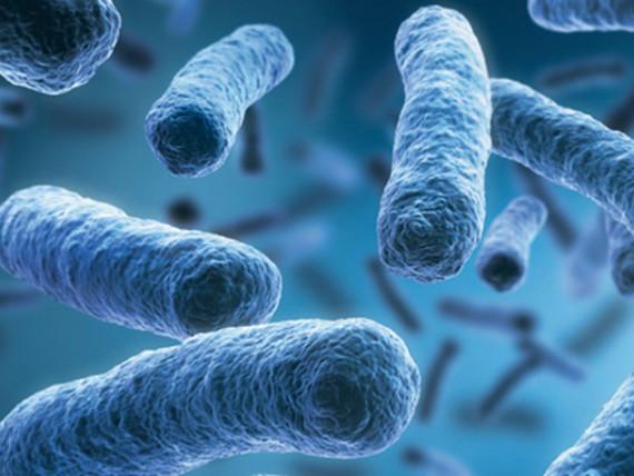Mikroskopische Aufnahme von Viren und Bakterien.