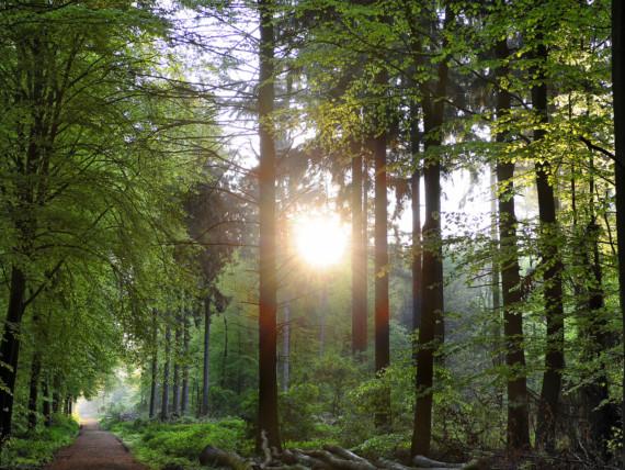 Stimmungsbild aus einem Wald, die Sonne scheint durch die Blätter.